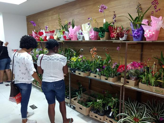 Mostra de Orquídeas - Pátio Alcântara