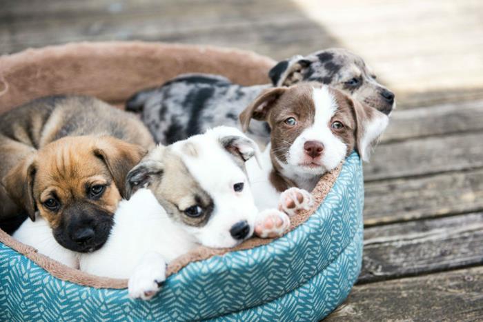 São Gonçalo Shopping realiza feira de adoção online de cães e gatos no domingo